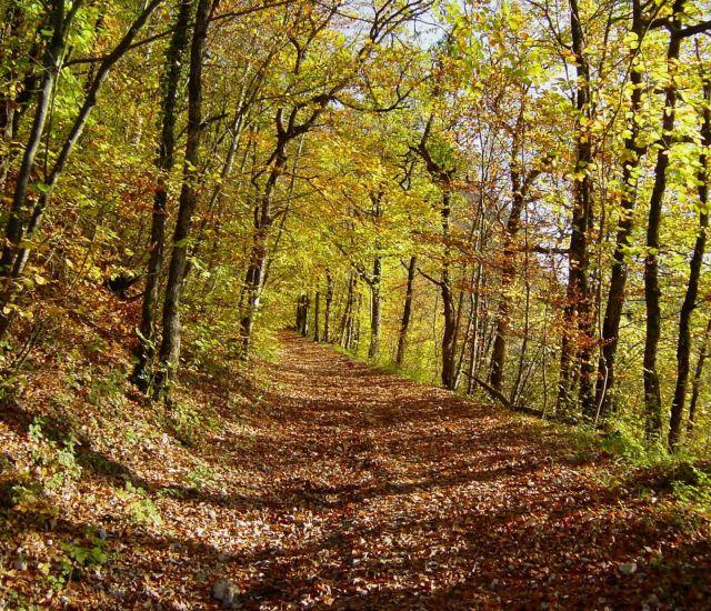 foto-camino-hacia-el-bosque